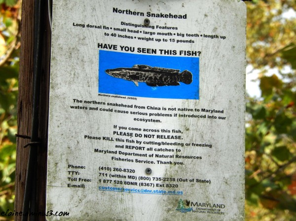 snakehead fish sign