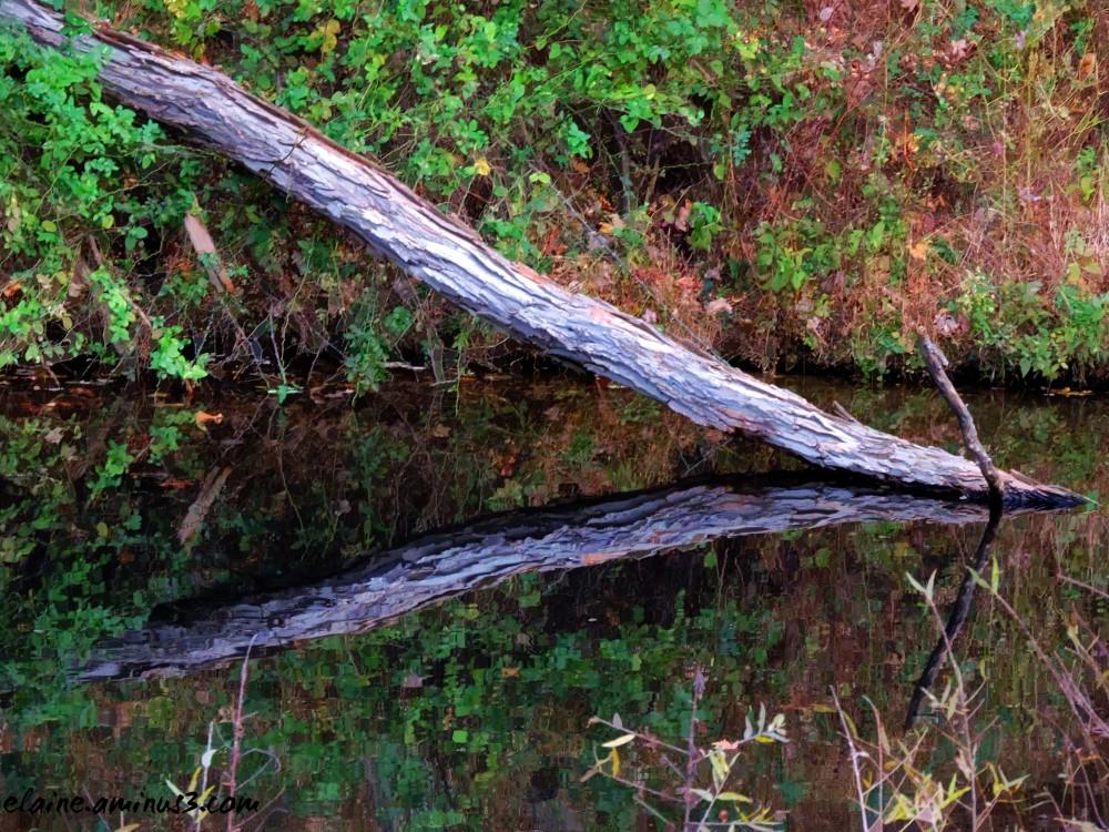 fallen log reflection