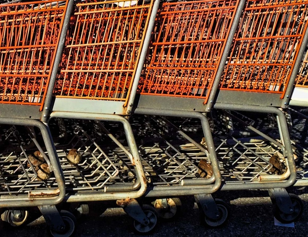 birds under shopping carts