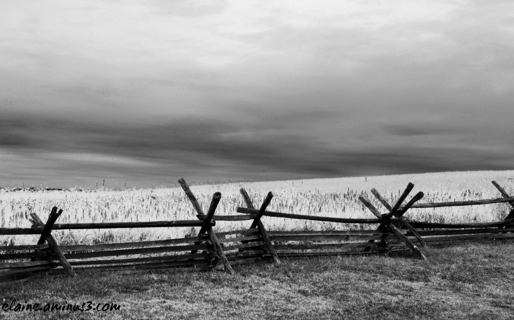 Antietam field