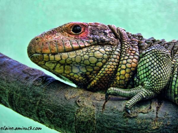 Colorful Creature