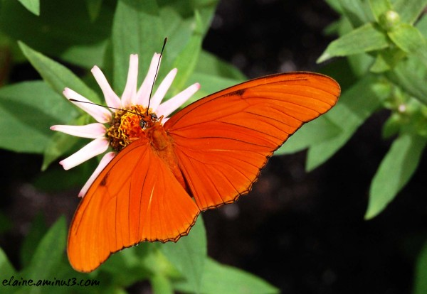 orange winged butterfly