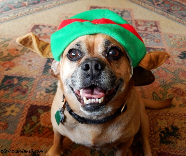 dog in elf hat