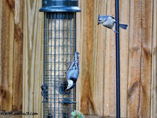 birds are bird feeder