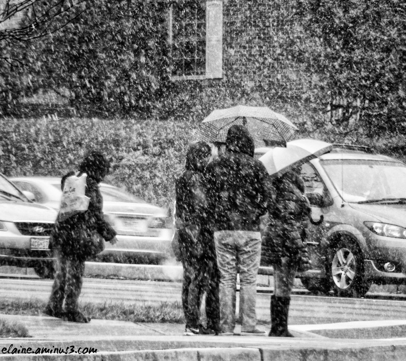 people in snow