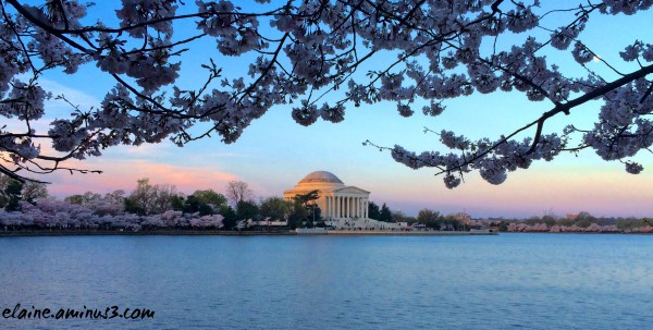 Spring in Washington, DC