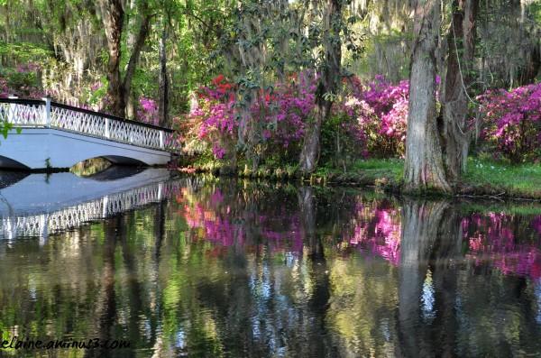 magnolia plantation pond