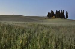 Torrenieri trees