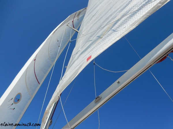 sails and sailboat