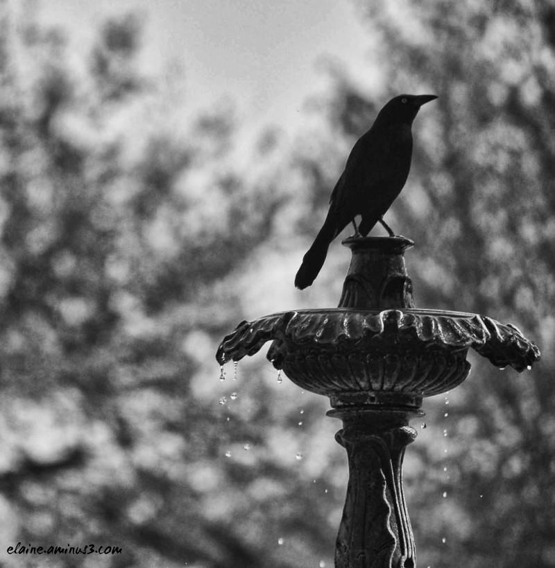 bird on fountain