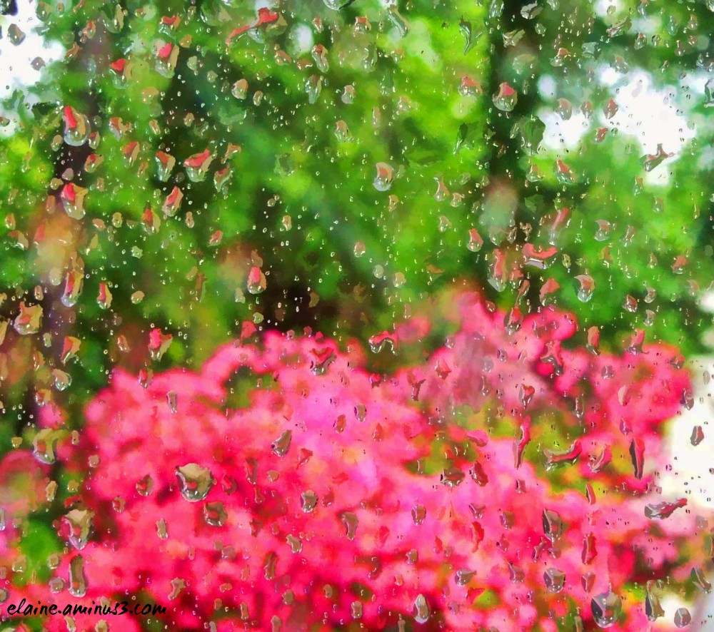 rain and azalea