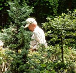 man and bonsai trees