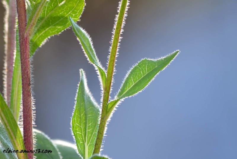 plant stem