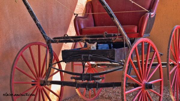 cat in a carriage