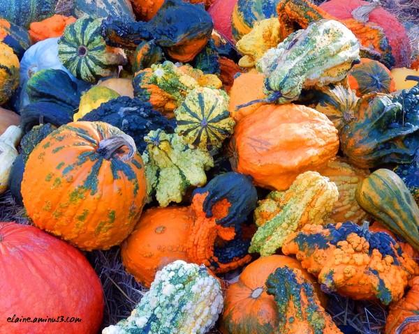 squash, gourds, and pumpkins