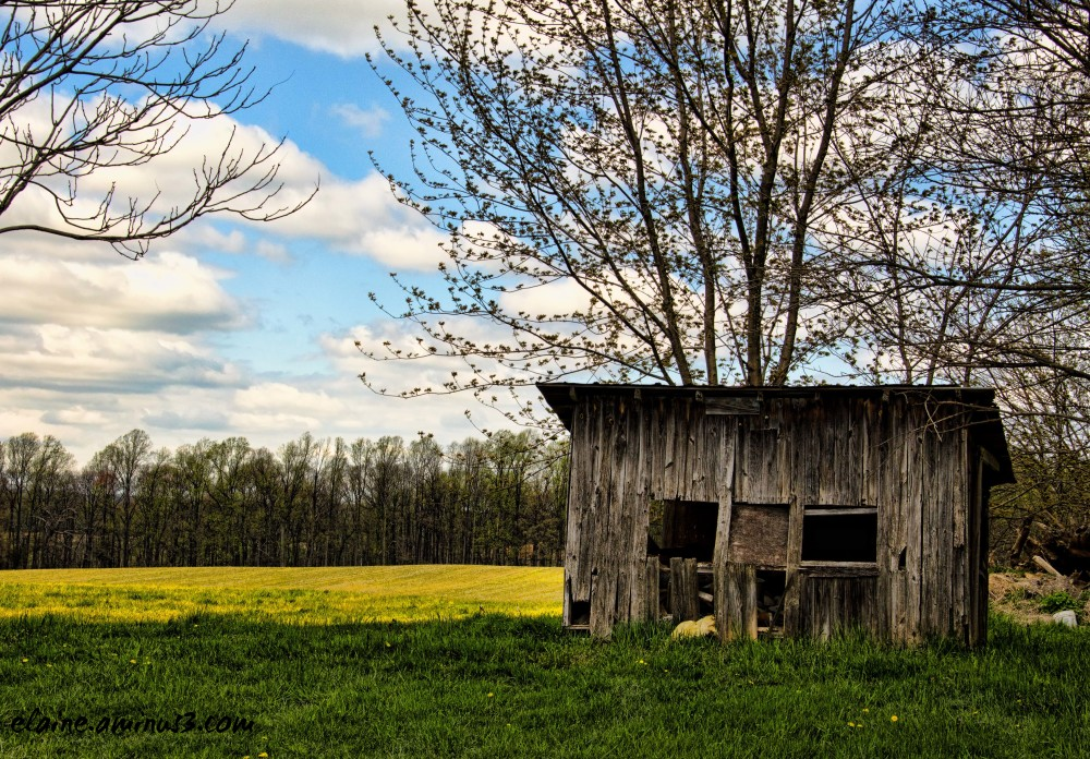 shack and field