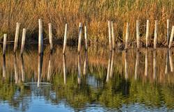 Blackwater marsh