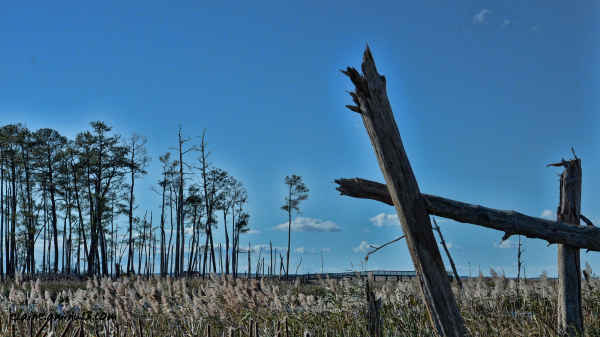 Blackwater marsh