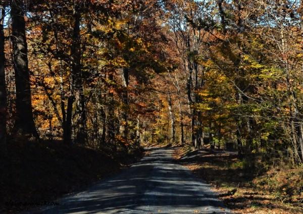 Road to Bennett Creek