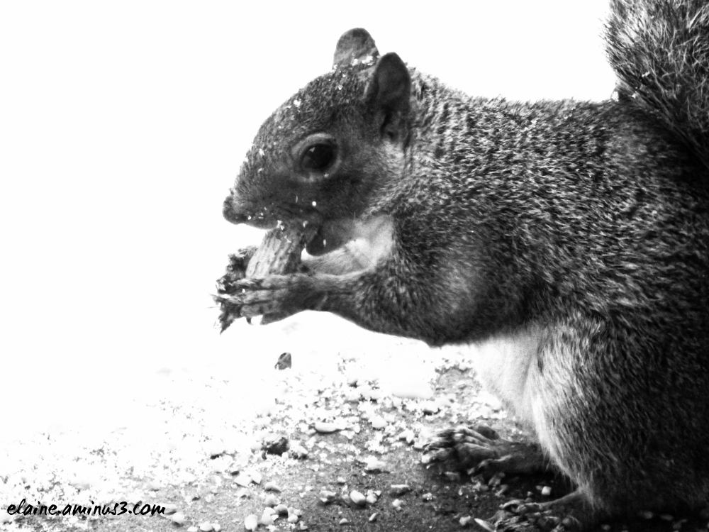 squirrel eating a peanut