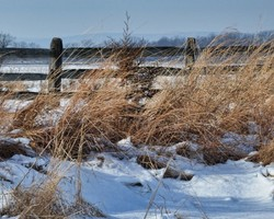 fence and grass