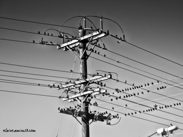 Bird Convention