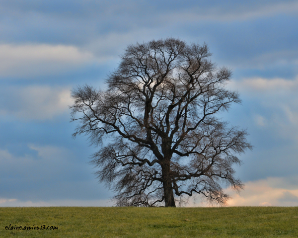 End of the Lone Tree