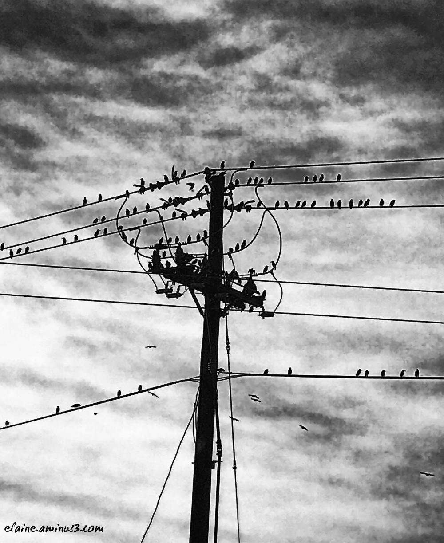 birds on power pole