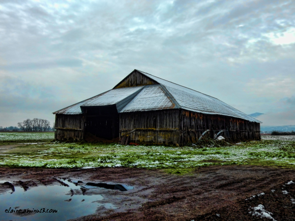 shed in a field