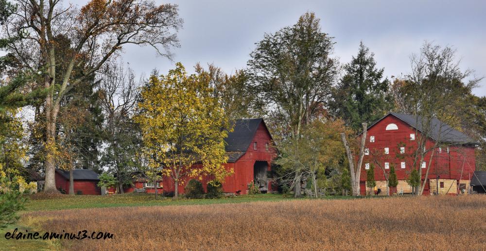 Bella Vita Farm