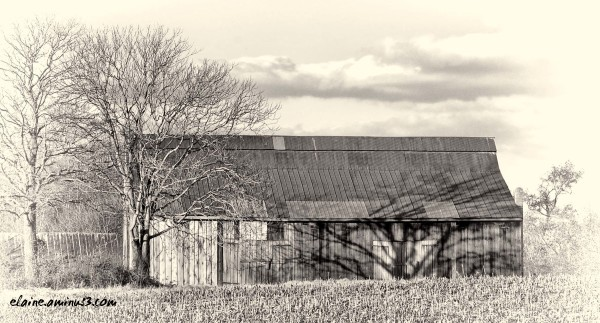 barn and trees