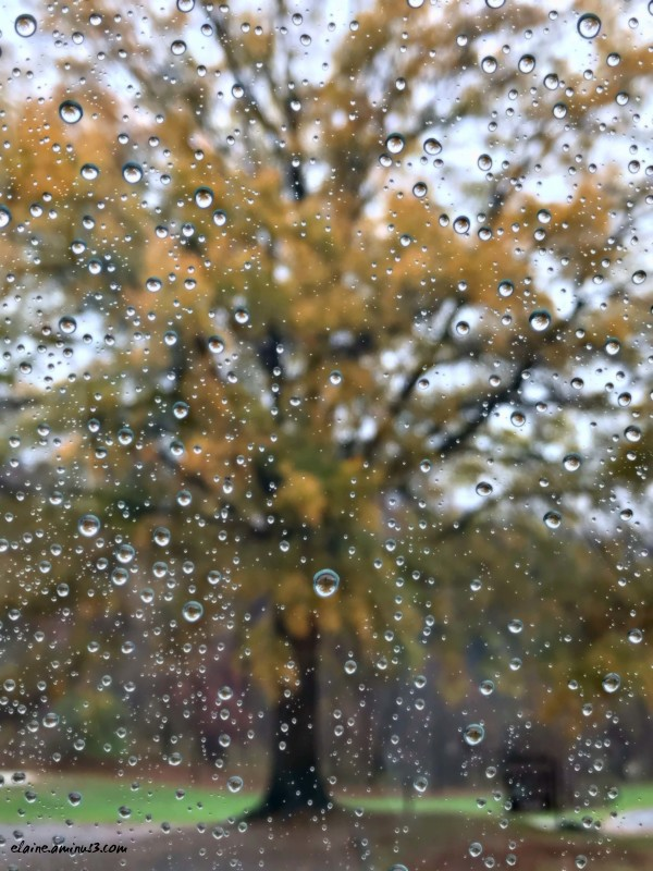 rainy day tree