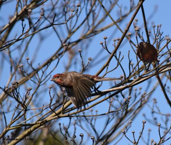 bird flying away