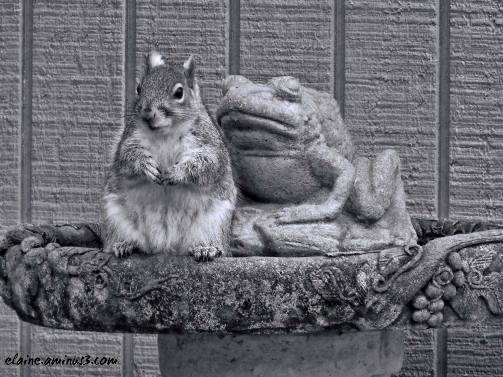 squirrel and stone frog