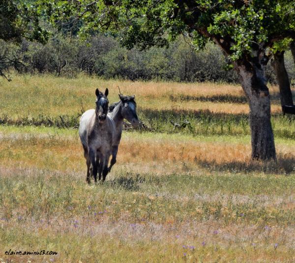 hesitant horses