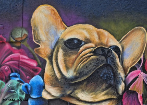 dog mural, Florida