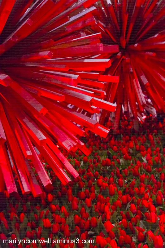 red sticks urchin sculpture with red tulip flowers