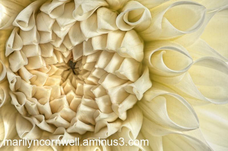 antique white silk white dahlia folded and pleated