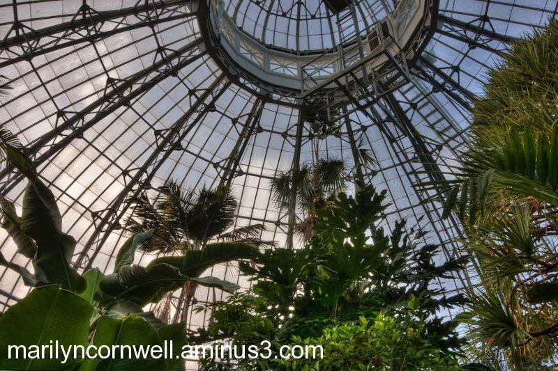 Palm House, Allan Gardens