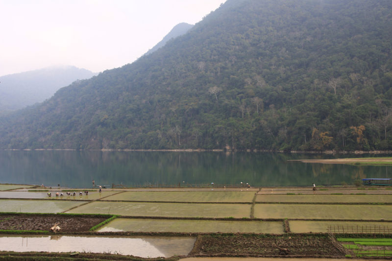 Rice fields at Ba Be