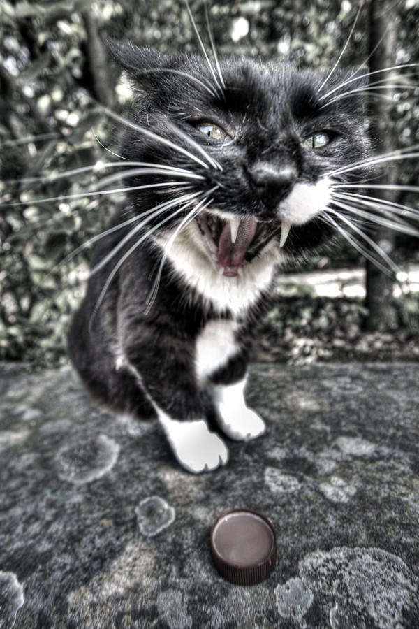 A cat in Boboli garden