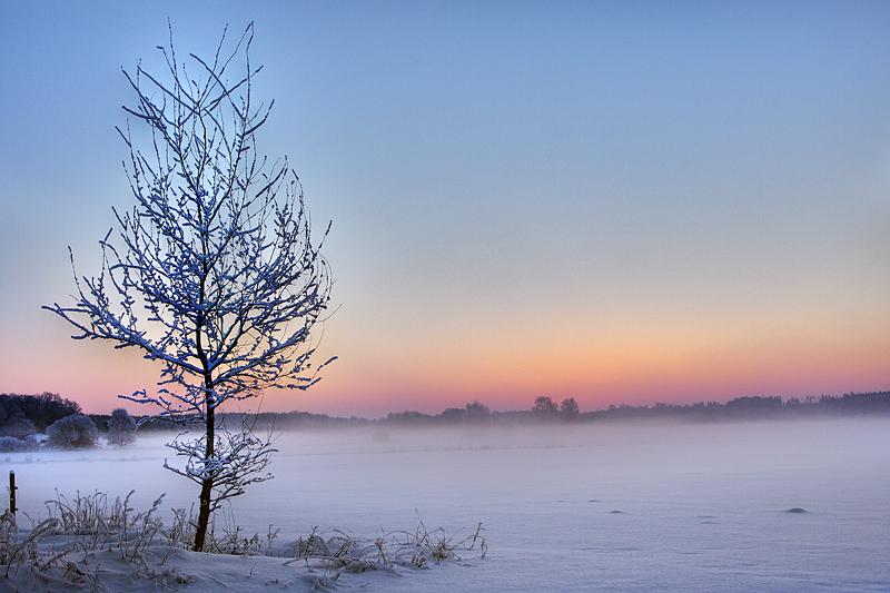 Winter Croplands