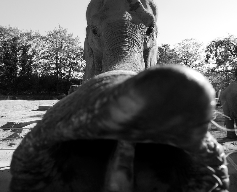 Elephant Hagenbecks Tierpark