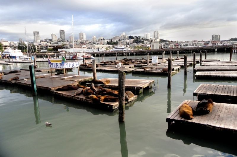 Seals of San Francisco