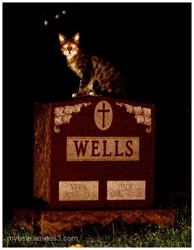 Cat at the cemetary