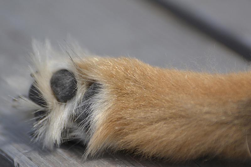 Pup's paw