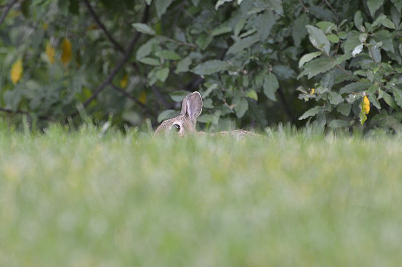 Hide and Seek bunny