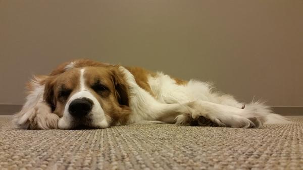 portrait of a dog - part 3