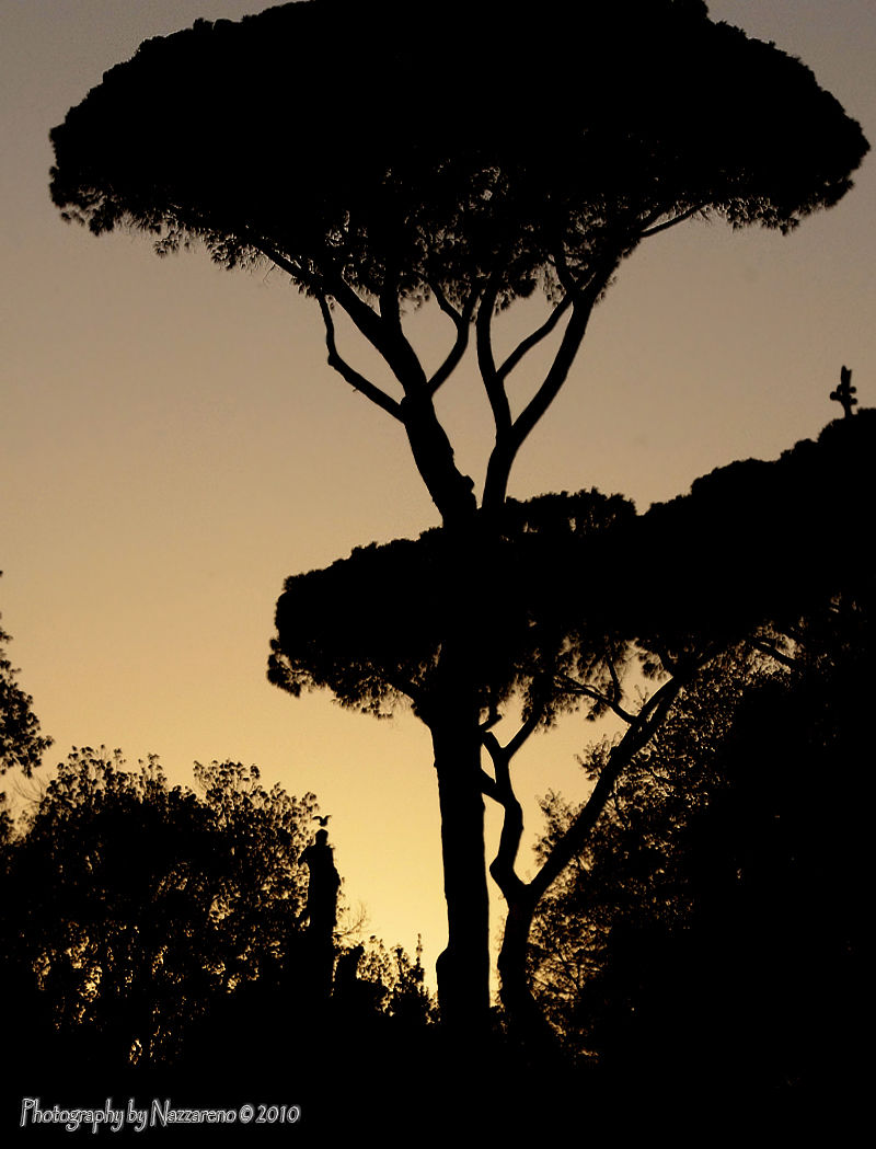 The trees of Villa Borghese at sunset