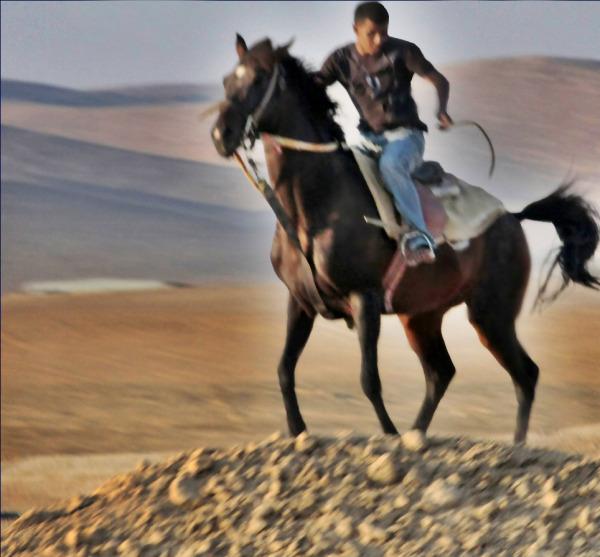 animal, desert,